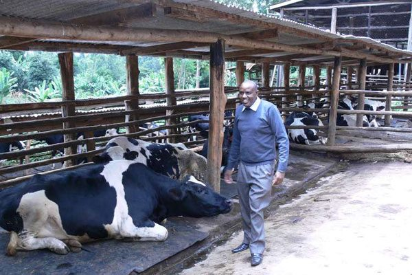 Best dairy cows in Kenya